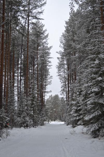 лыжня_lyzhnya