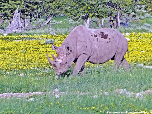 rinoceronte-etosha-namibia.JPG