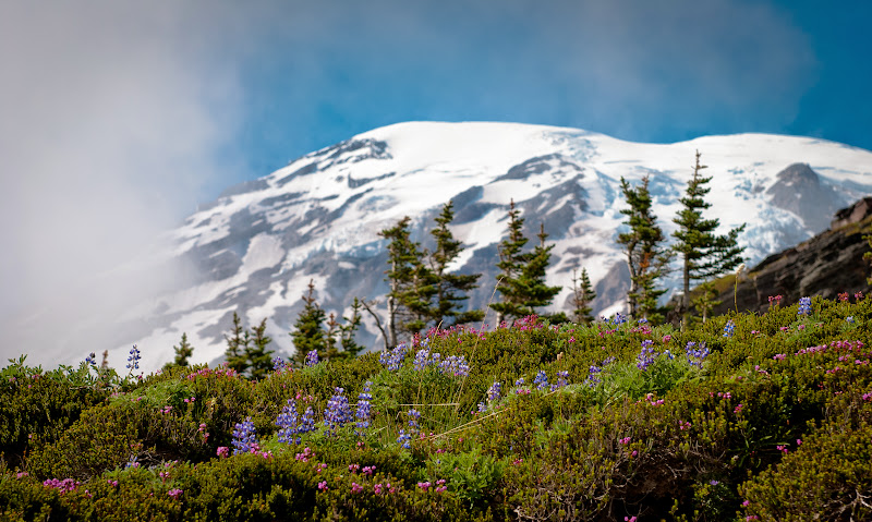 Mount Rainier National Park, WA, USA