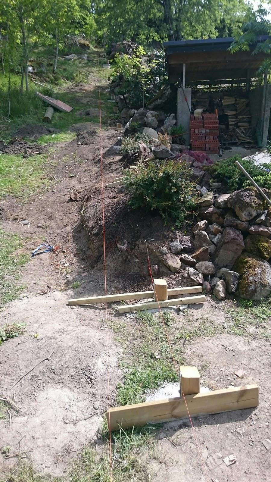 Lindholm garden: flytt av idegran (taxus baccata)