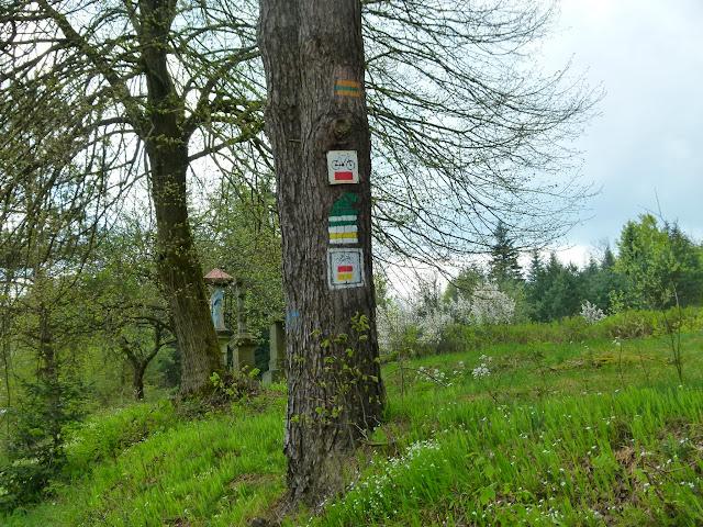 Zajęcia terenowe Źródliska Wisłoki - P1120828.JPG
