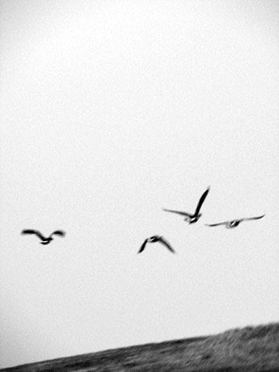 Winter Selections - IMG_9160.jpg