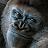 Loic mel avatar image
