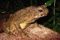 Toad on the plankwalk | photo © Matt Kirby