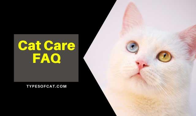 Cat Care FAQ