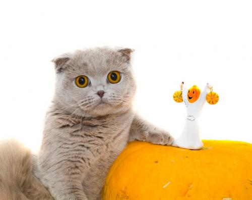 gatto e fantasma