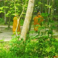 [L5G-0020] Lớp Ngũ Giới (17/06/2008): Lao tác và khất thực