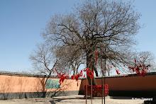 Temple Yaowangmiao : arbre à voeux