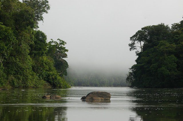 Le matin sur l'Approuague près de Saut Athanase (Guyane). 22 novembre 2011. Photo : J.-M. Gayman