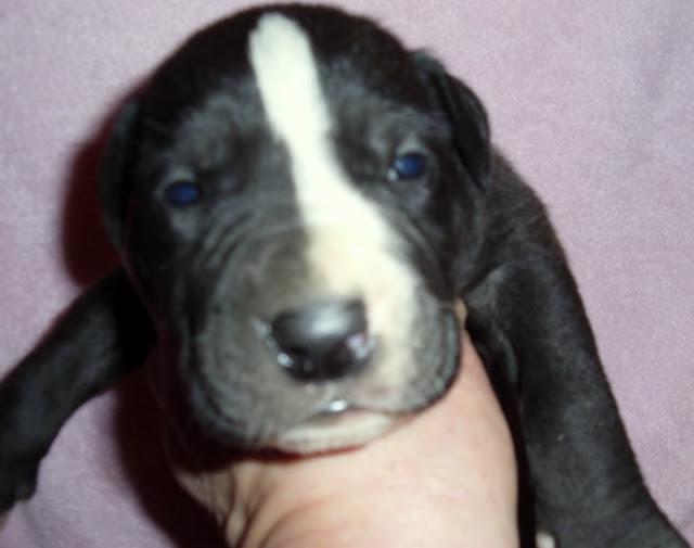 Cookie Carson @ 3 weeks