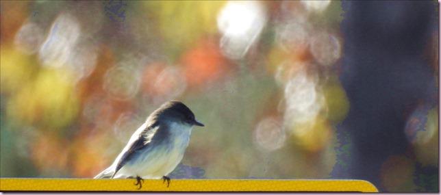 birdbanRDSCN4847