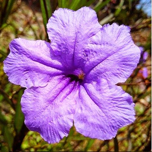 bunga warna unggu