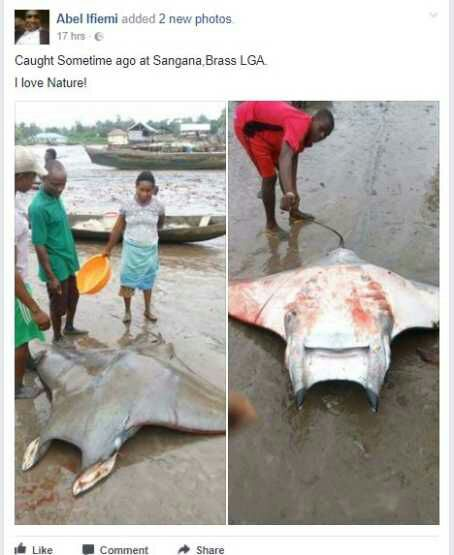 See the Rare Type of Fish Residents Caught in Bayelsa State (Photos)