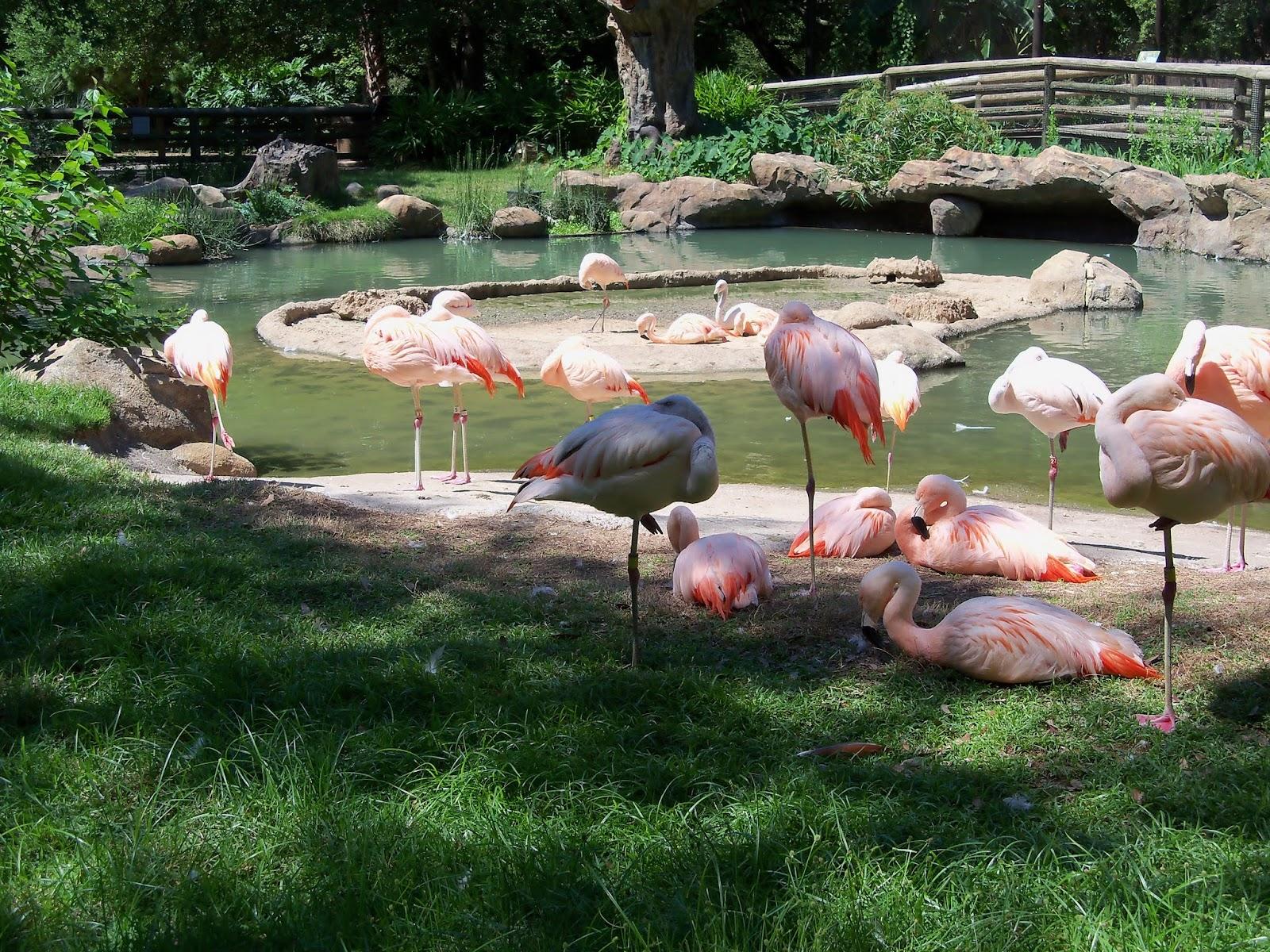 Houston Zoo - 116_8456.JPG