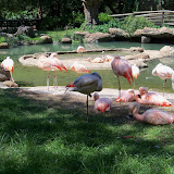 Houston Zoo - 116_8456.JPG