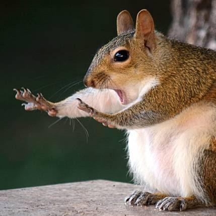 Chun Cheung