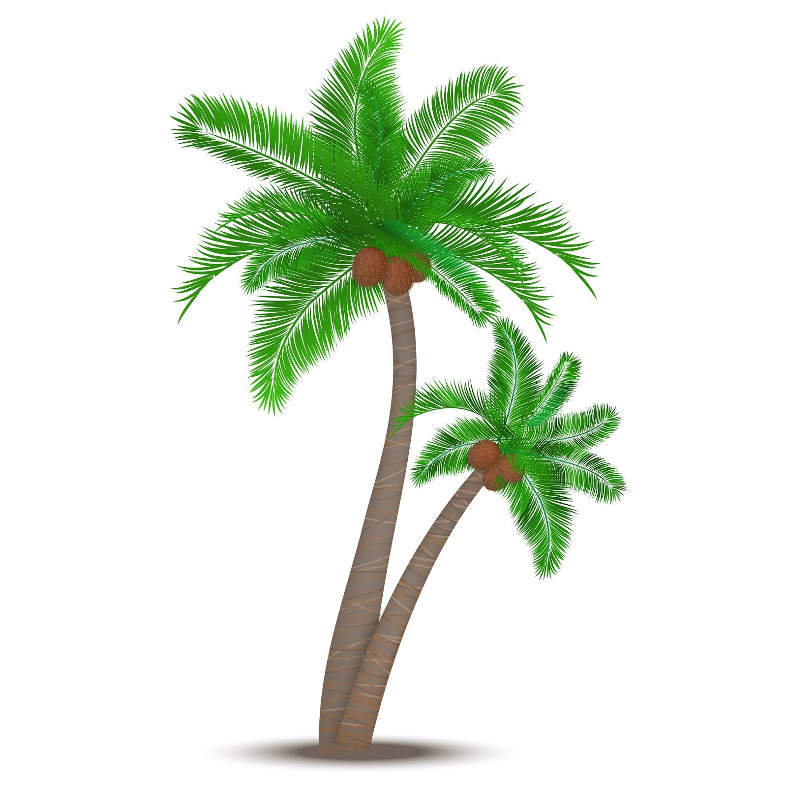 Tropical Palm Tree With Coconuts Symbol Free Download Vector CDR, AI, EPS and PNG Formats