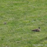 05-11-12 Wildlife Prairie State Park IL - IMGP1568.JPG