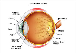 Bagian Mata