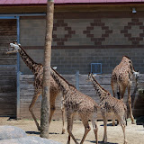Houston Zoo - 116_8559.JPG
