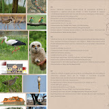 Turulung/Túrterebes - Panouri Informative - Információs táblák - Infoboards