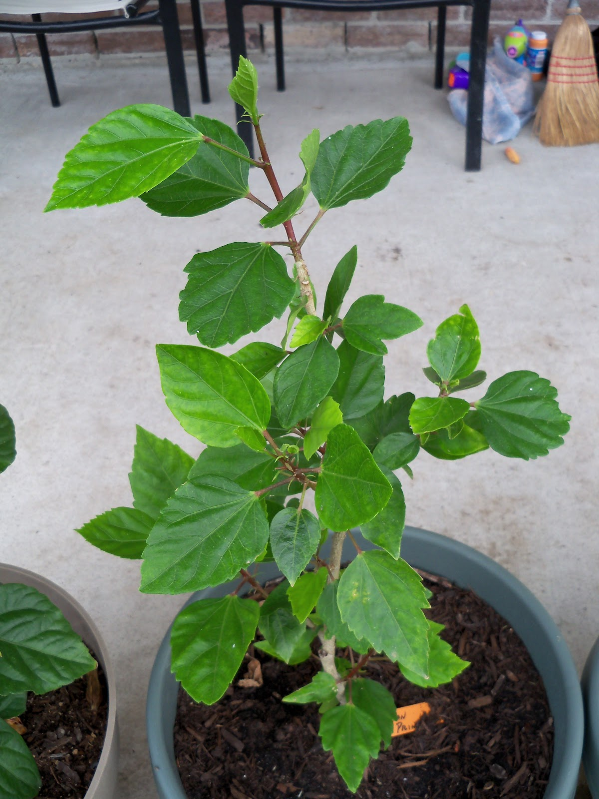 Gardening 2010, Part Two - 101_2303.JPG