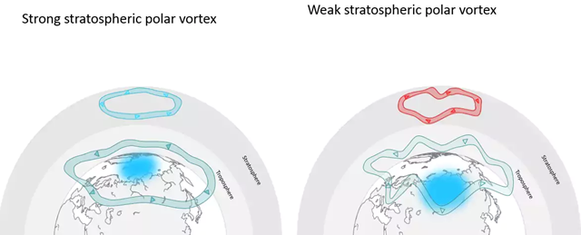 Diagram showing the polar stratospheric vortex in strong and weak states. Graphic: Marlene Kretschmer / The Washington Post