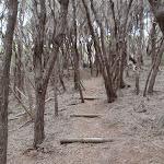 Light to Light walk through the thick bush (104719)
