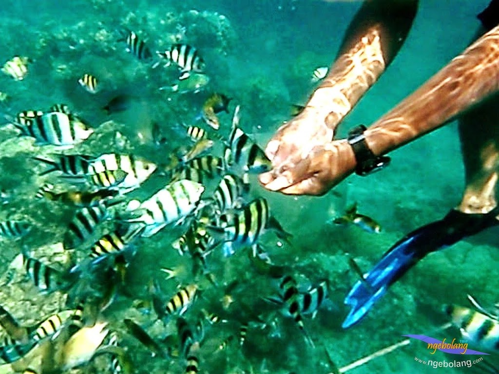 explore-pulau-pramuka-olp-15-16-06-2013-09