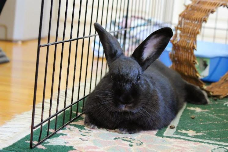 Bunny #2 Luna