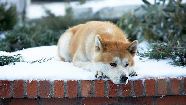 [Reflexión] ¿Por qué los Perros viven menos tiempo que las personas?