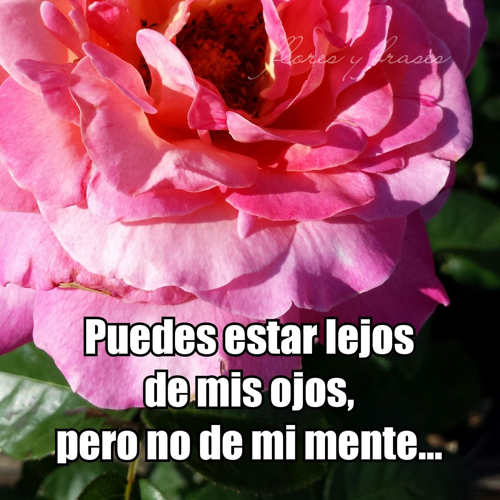 Flores Y Frases Mensajes Para La Persona Que Siempre Esta En Mi Mente