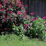 Gardening 2012 - 115_2547.JPG