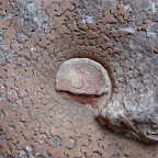 Fósil encontrado en las cuevas