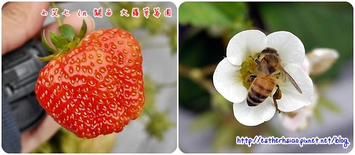 9 小蜜蜂也愛ㄋㄟ