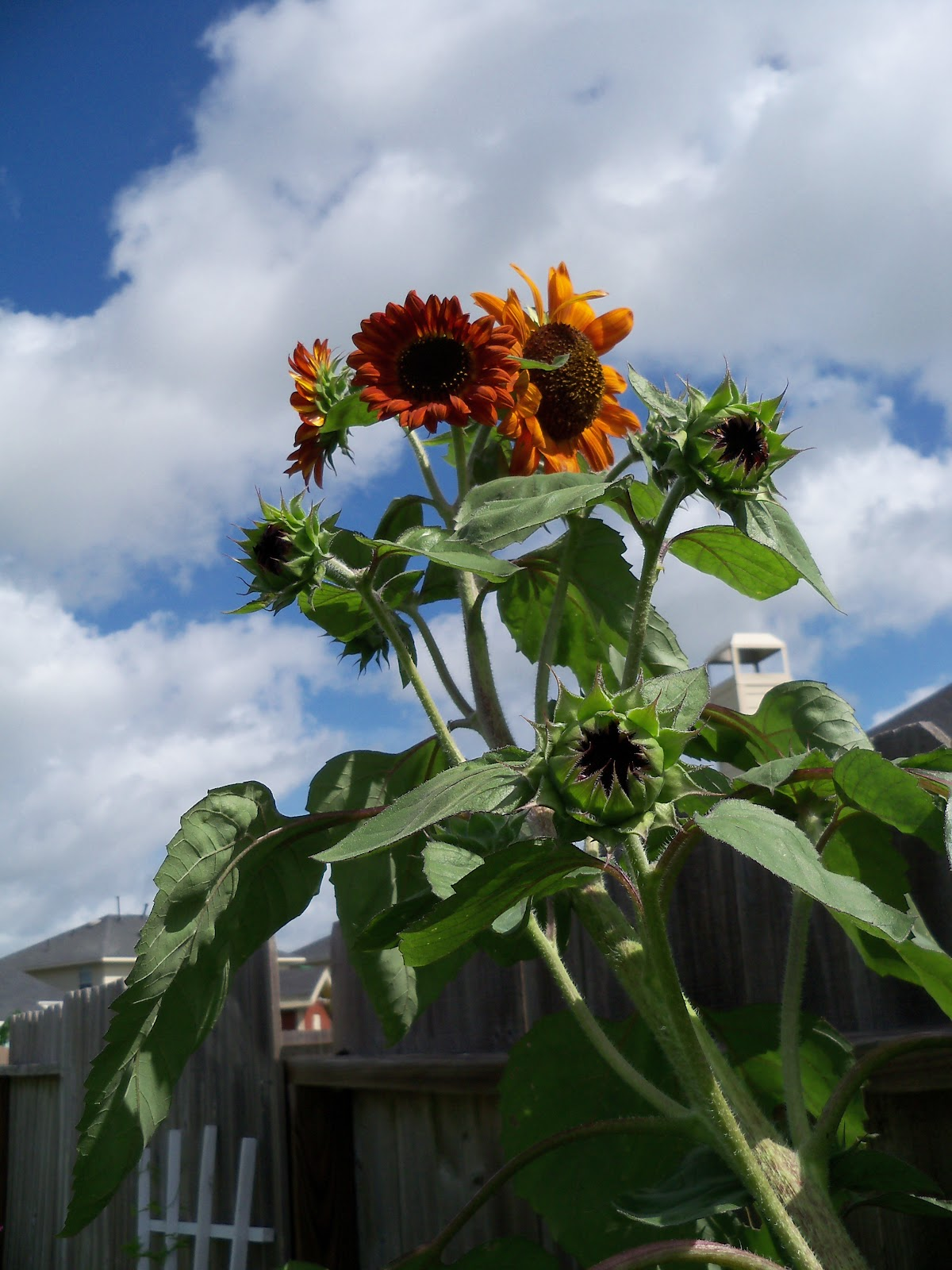 Gardening 2010, Part Three - 101_3670.JPG
