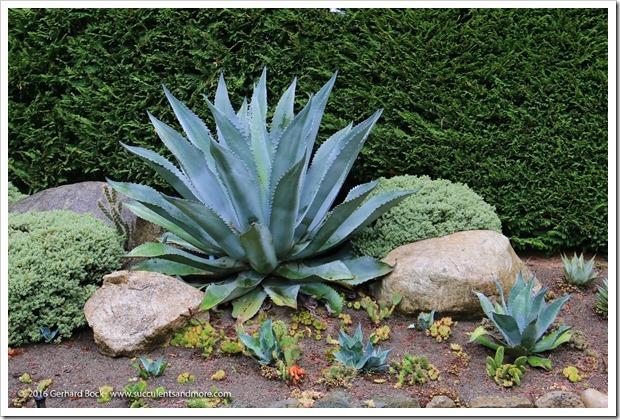 160906_Butchart_Gardens_0008