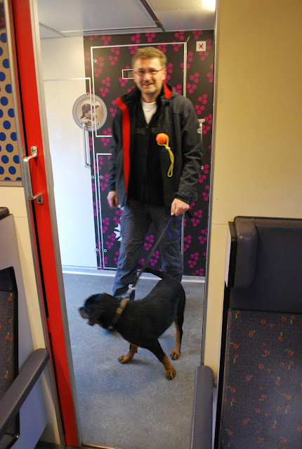 KNON-honden in Emmen - DSC_0762.JPG