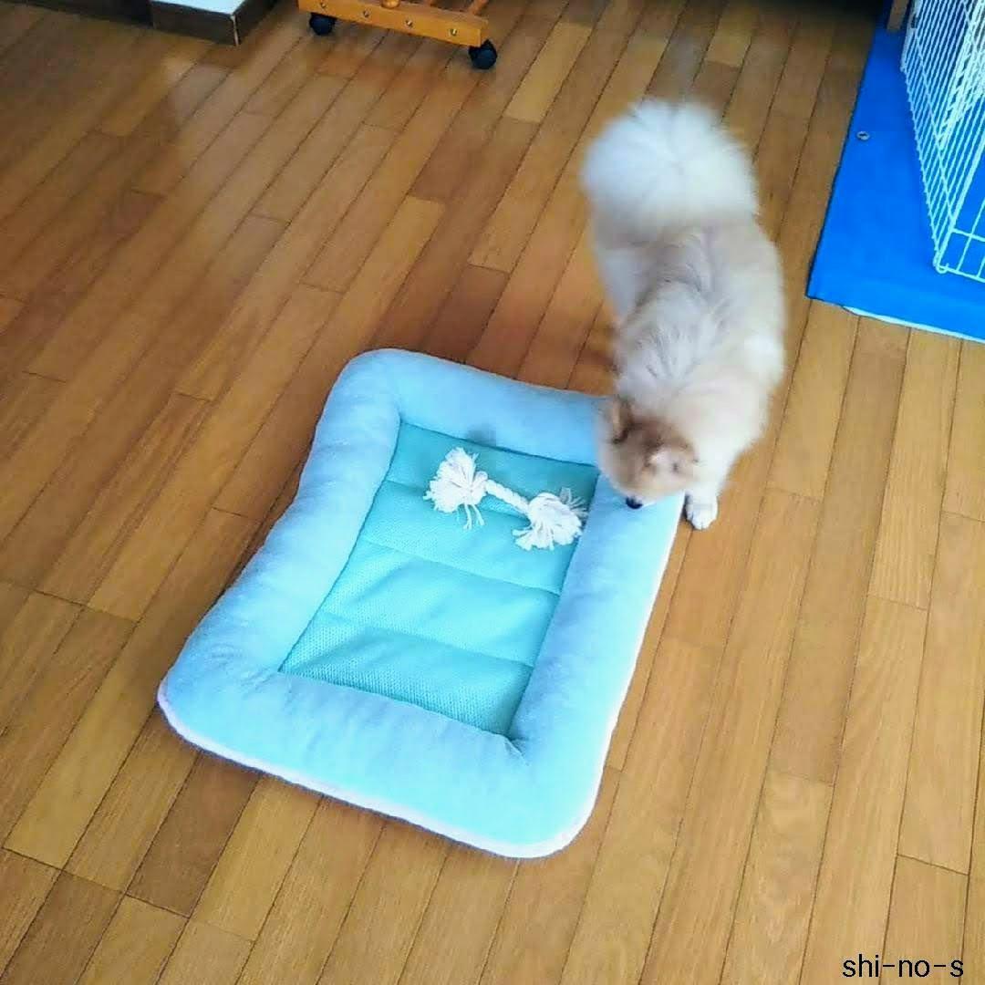 ミミがシートクッションの上にある、犬のおもちゃを見つけた所