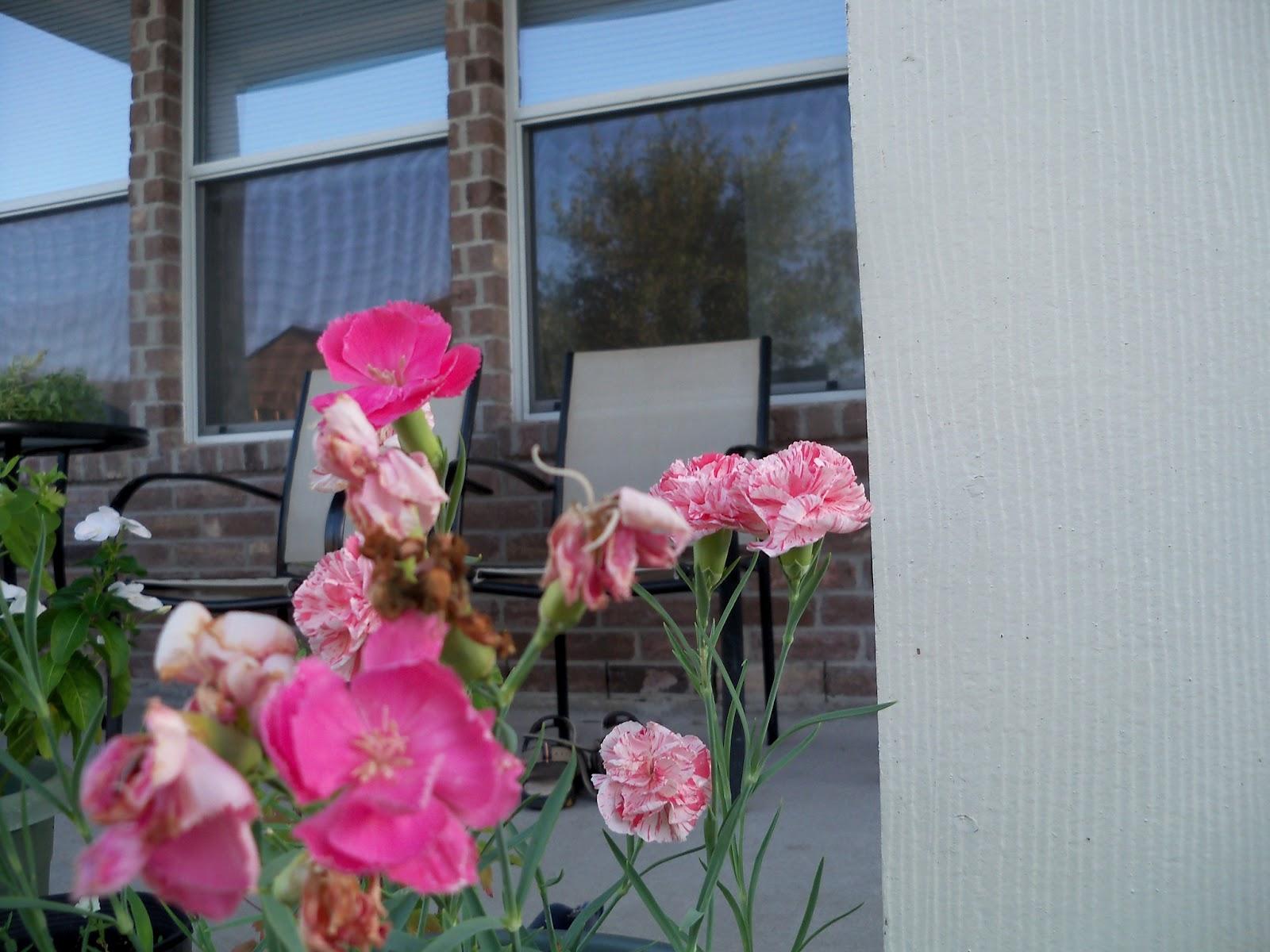 Gardening 2012 - 115_2606.JPG
