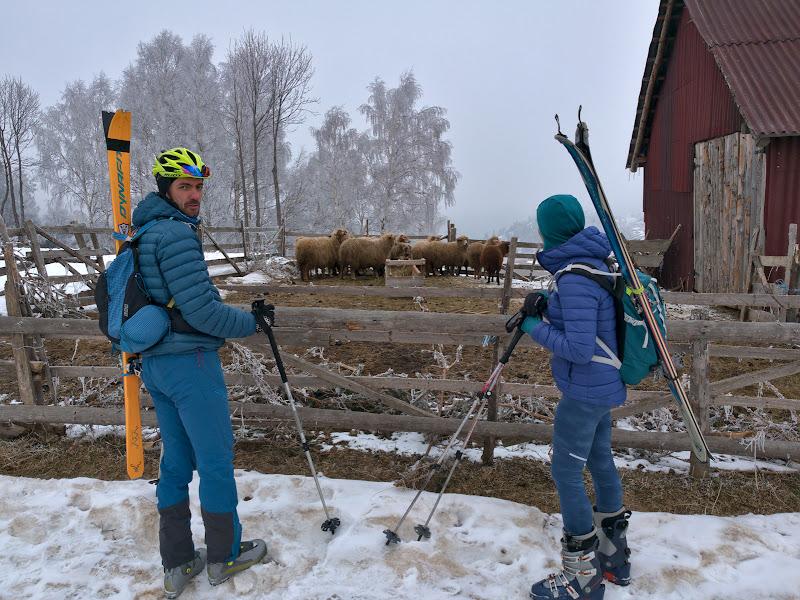La plecare, pe langa casa Folea, cu schiurile in spate, privind descumpaniti oile ce se intreaba si ele unde e zapada.