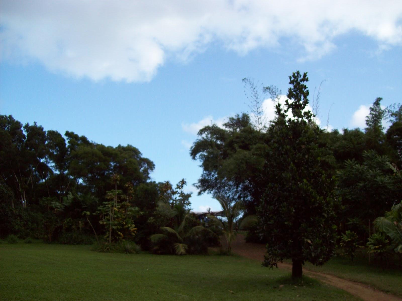 Hawaii Day 5 - 100_7335.JPG