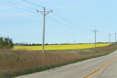 Mustard Field Sep 22