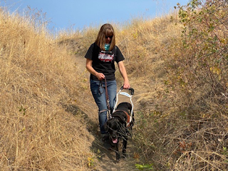 Woman and guide dog navigate downhill sandy trail flanked by dry grass with blue sky above.