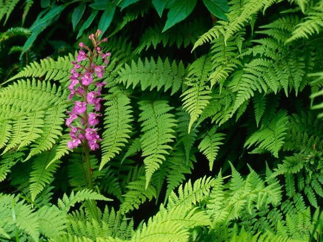 Florist Near Me: Popular Flowers From Australia