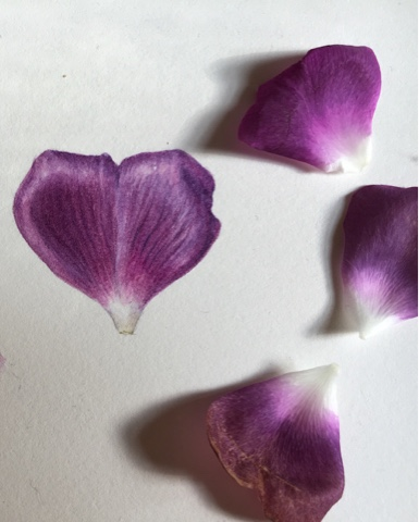 Purple made using Rose petal, dry brush techniques