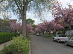 Hubbell Park street scene
