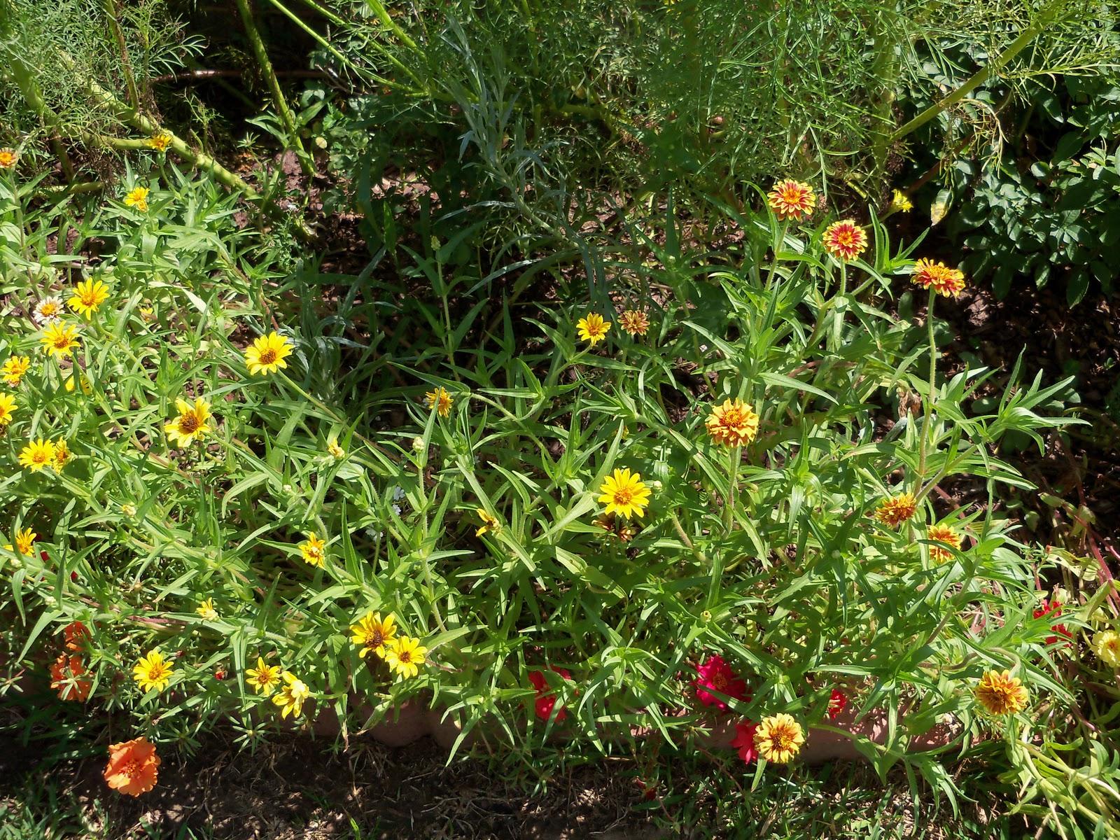 Gardening 2010, Part Three - 101_4364.JPG