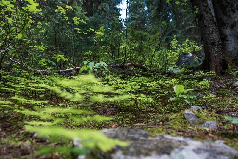 revett lake trail-7