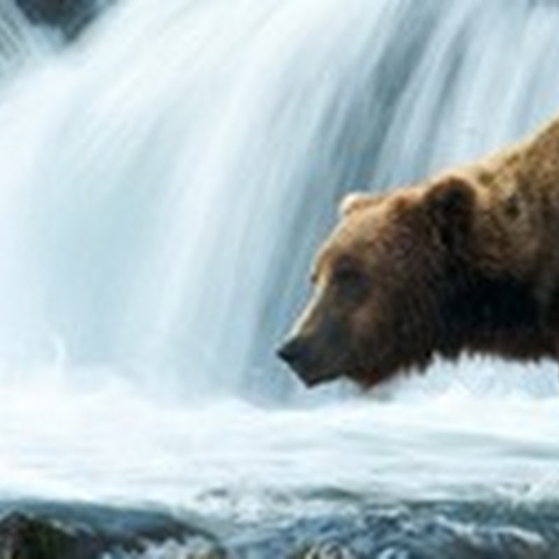 Bear Watching in Katmai National Park and Preserve.